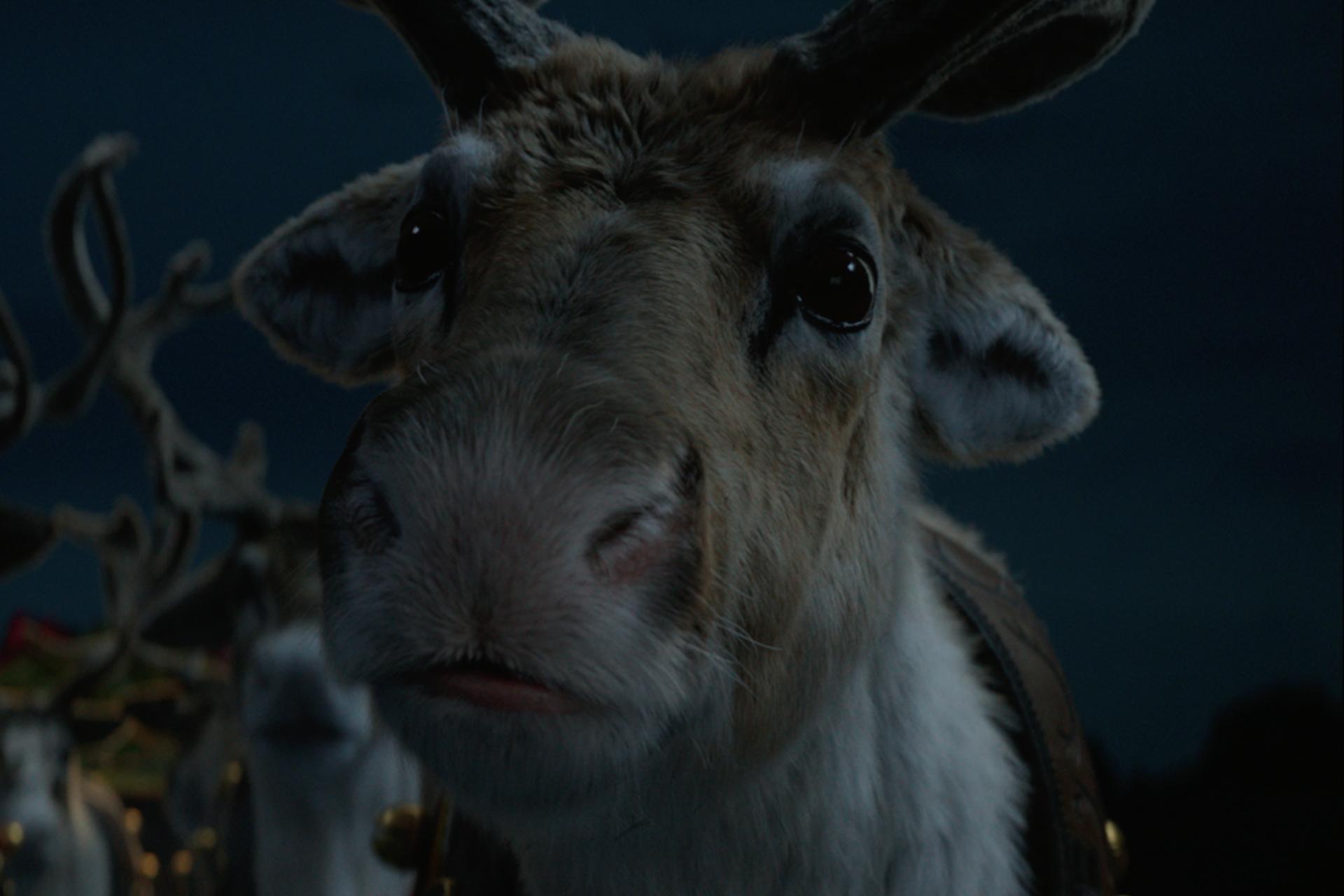 'Reindeer Ready'
